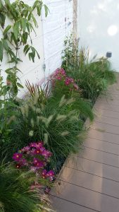 AàZ architectes MEB 03 terrasse plantes