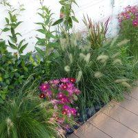 AàZ architectes MEB 03 terrasse&plantes